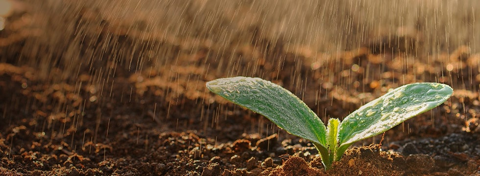 Image of plant growing during rainstorm